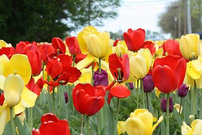 Flowers and Veggies